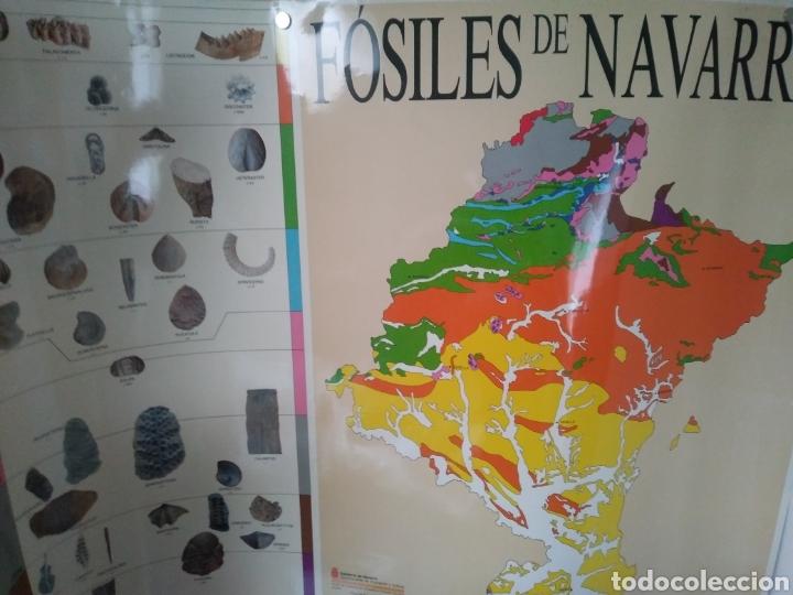 FOSILES DE NAVARRA. CARTEL MAPA (Coleccionismo - Carteles Gran Formato - Carteles Varios)