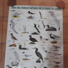 Carteles: CARTEL POSTER- AVES DEL PARQUE NATURAL DE LA BAHÍA DE CADIZ- ECOLOGISTAS EN ACCIÓN 1988. Lote 139811410