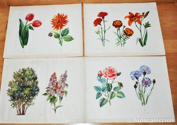 LOTE 4 CARTELES ESCOLARES .TEMATICA -FLORES.URSS/1960 A (Coleccionismo - Carteles Gran Formato - Carteles Varios)