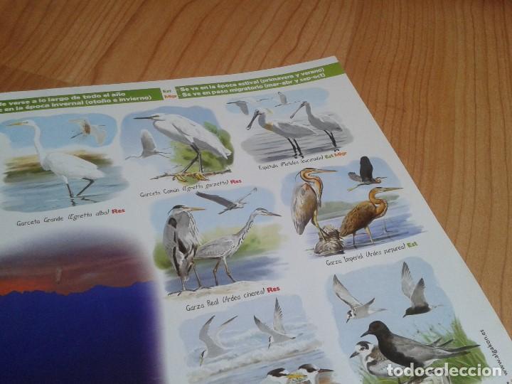 Carteles: Cartel -- Aves del embalse de Rosarito -- Candeleda ( Gredos ) -- Ornitología -- Poster 58 x 42 cm - Foto 3 - 167308172