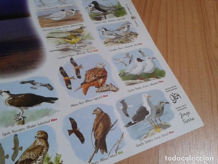 Carteles: Cartel -- Aves del embalse de Rosarito -- Candeleda ( Gredos ) -- Ornitología -- Poster 58 x 42 cm - Foto 4 - 167308172
