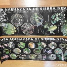 Carteles: FLORA AMENAZADA DE SIERRA NEVADA 2 POSTERS (CARTELES). Lote 167717760