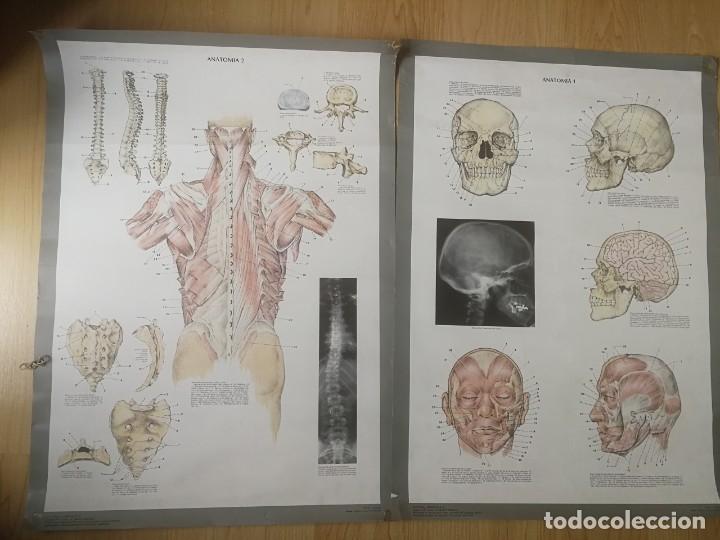 2 CARTELES DE 60X40 TEMA ANATOMIA 1 Y 2 (Coleccionismo - Carteles Gran Formato - Carteles Varios)