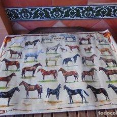 Carteles: GRAN PÓSTER DE RAZAS DE CABALLOS, HORSES, CHEVAUX. MIDE 98 X 68 CM.. Lote 192894787