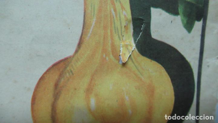 Carteles: Orangina Trinaranjus Doctor Trigo Valencia. Recorte publicidad. papel recio. 31 x 24 cm - Foto 4 - 194254292