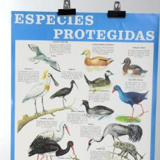 Carteles: POSTER DE LOS 70 ICONA ESPECIES PROTEGIDAS DE FOURNIER, PÁJAROS. Lote 216602706