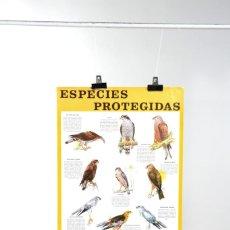 Carteles: POSTER DE LOS 70 ICONA ESPECIES PROTEGIDAS DE FOURNIER, AVES RAPACES. Lote 216603386