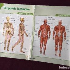 Affiches: CARTEL DE ESCUELA GRAN FORMATO, VINTAGE, EL APARATO LOCOMOTOR, SANTILLANA, UNOS 100 X 69 CMS.. Lote 286933318