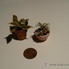 Doll houses - MACETAS DE PLANTAS - 38089508