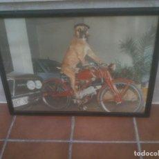 Coches y Motocicletas: FOTOGRAFÍA GRAN FORMATO MOTO GUZZI HISPANIA.. Lote 198094977