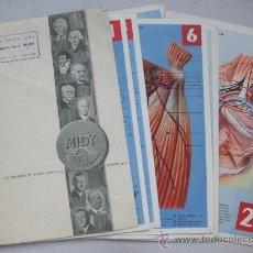 Catálogos publicitarios: CARPETA DE LABORATORIOS MIDY CON PUBLICIDAD DE BALSAMO MIDALGAN Y 21 LAMINAS ANATOMIA. AÑOS 50.. Lote 32008211