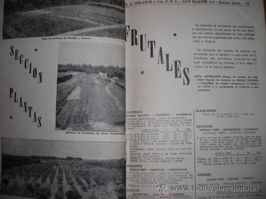 Catálogos publicitarios: CATALOGO DE HORTALIZAS Y FRUTALES, por J.A. DIHARCE Y CIA - Argentina - DECADA DE 1950 - RARO - Foto 4 - 36978525