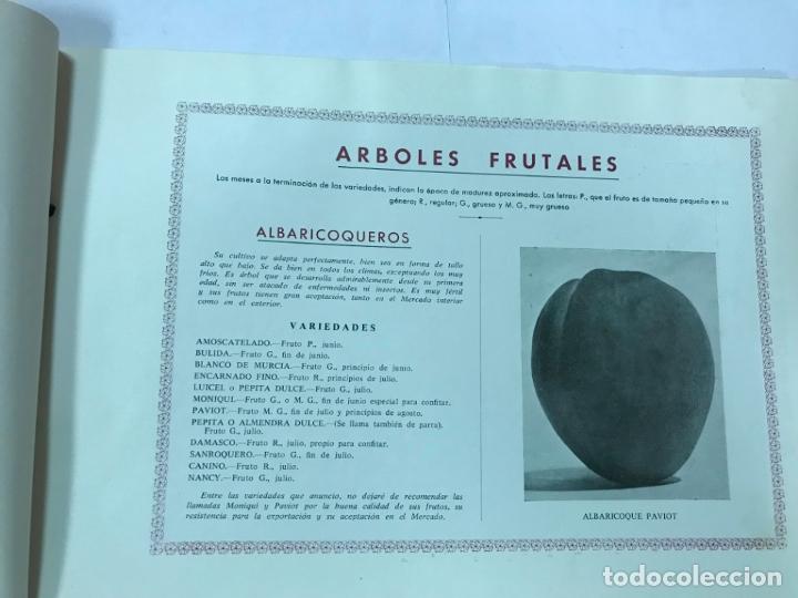 Catálogos publicitarios: CATALOGO GENERAL VIVEROS PRUDENCIO VILLALBA ARANAZ, 1961-62.- MADRID. - Foto 3 - 178058663