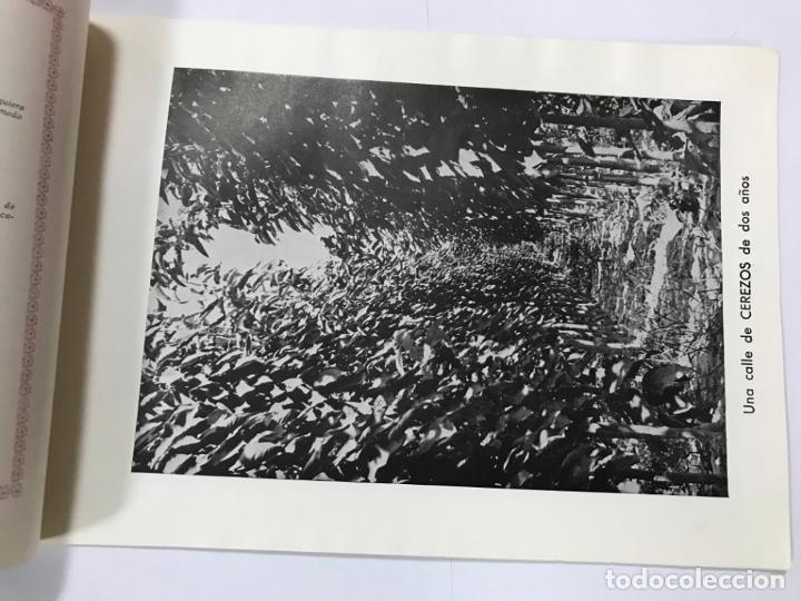 Catálogos publicitarios: CATALOGO GENERAL VIVEROS PRUDENCIO VILLALBA ARANAZ, 1961-62.- MADRID. - Foto 4 - 178058663
