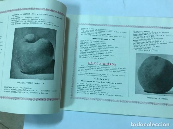 Catálogos publicitarios: CATALOGO GENERAL VIVEROS PRUDENCIO VILLALBA ARANAZ, 1961-62.- MADRID. - Foto 5 - 178058663