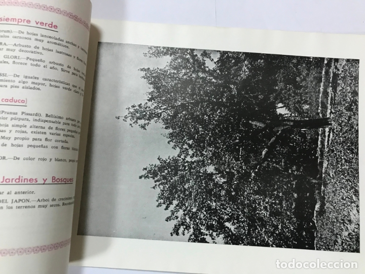 Catálogos publicitarios: CATALOGO GENERAL VIVEROS PRUDENCIO VILLALBA ARANAZ, 1961-62.- MADRID. - Foto 6 - 178058663