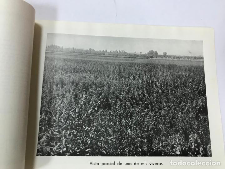 Catálogos publicitarios: CATALOGO GENERAL VIVEROS PRUDENCIO VILLALBA ARANAZ, 1961-62.- MADRID. - Foto 7 - 178058663