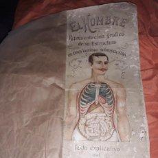 Catálogos publicitarios: ANTIGUO LIBRO EL HOMBRE REPRESENTACIÓN GRÁFICA DE SU ESTRUCTURA EN CINCO LÁMINAS, D RAFAEL DEL VALLE. Lote 195213942