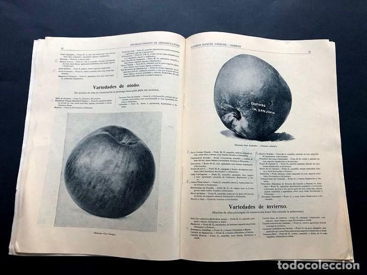 Catálogos publicitarios: CATALOGO GENERAL / VIVEROS MANUEL SANJUAN / AÑOS 30 / SABIÑAN ( ZARAGOZA ) 80 PAGINAS ILUSTRADAS - Foto 3 - 202005783