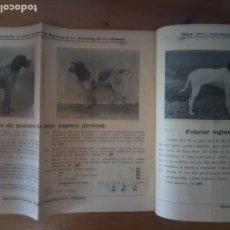 Catálogos publicitarios: ANTIGUO CATÁLOGO VENTA DE PERROS EXPORTACIÓN ALEMANIA. Lote 277474138