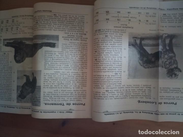 Catálogos publicitarios: Antiguo catálogo venta de perros exportación Alemania - Foto 2 - 277474138