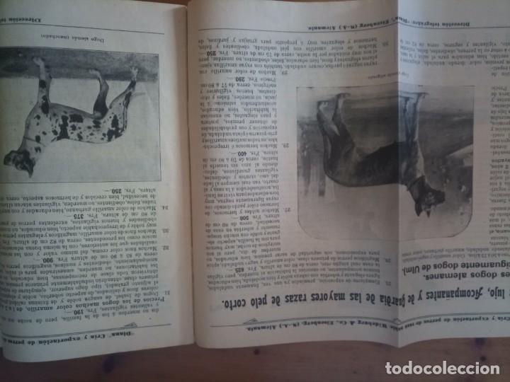 Catálogos publicitarios: Antiguo catálogo venta de perros exportación Alemania - Foto 3 - 277474138