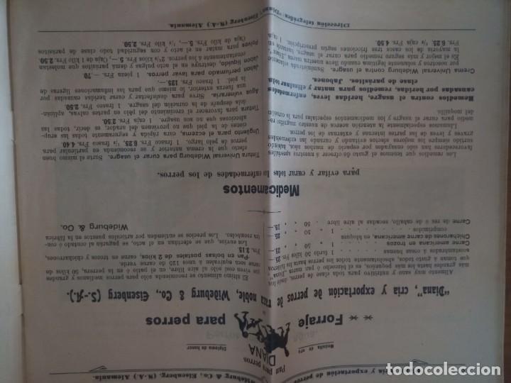 Catálogos publicitarios: Antiguo catálogo venta de perros exportación Alemania - Foto 5 - 277474138