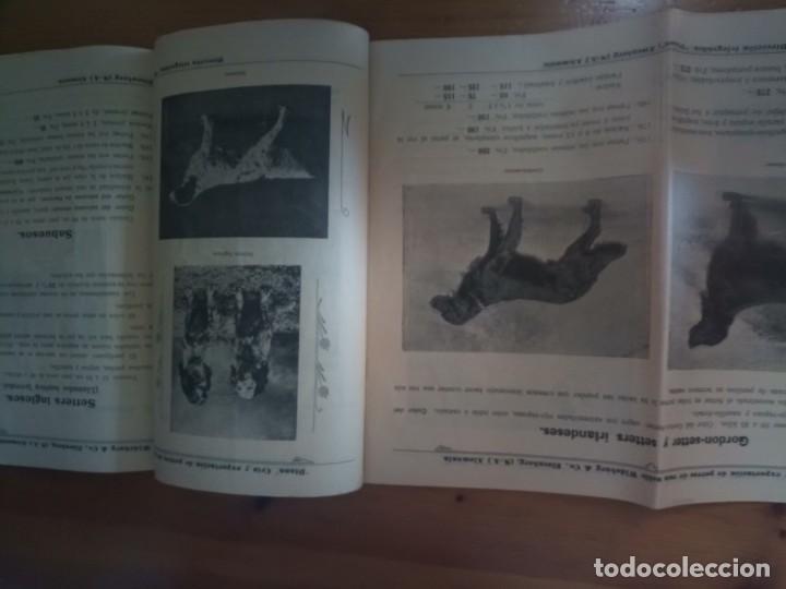Catálogos publicitarios: Antiguo catálogo venta de perros exportación Alemania - Foto 8 - 277474138