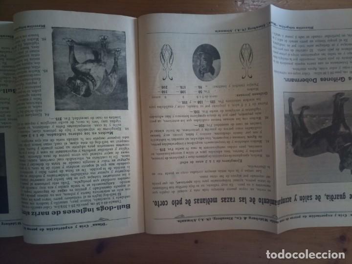 Catálogos publicitarios: Antiguo catálogo venta de perros exportación Alemania - Foto 9 - 277474138