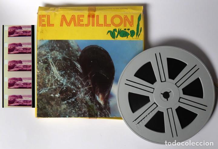 PELICULA CINE SUPER 8 SONORA, EL MEJILLÓN, ES DE 120 METROS, LA CAJA ÉS DE CARTÓN (Cine - Folletos de Mano - Documentales)