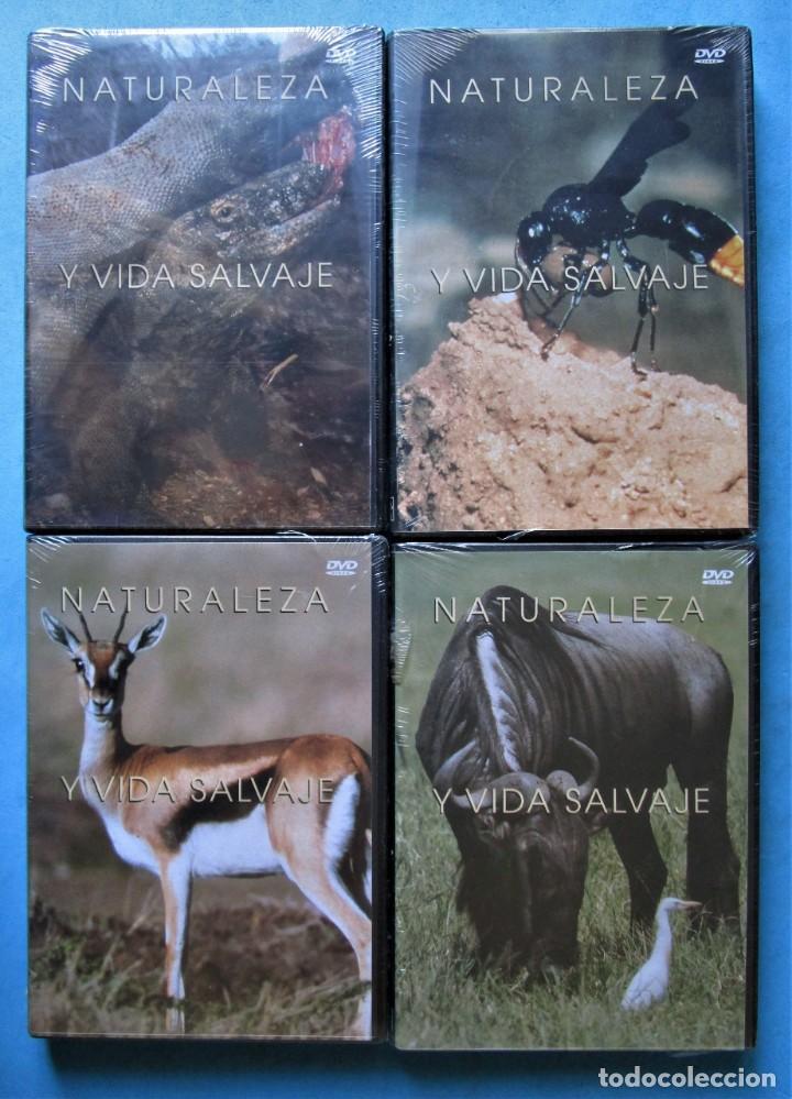 Cine: NATURALEZA Y VIDA SALVAJE (COMPLETA) 19 DVDS PRECINTADOS - SALVAT - 1999 (VER 6 FOTOS) - Foto 3 - 168174272