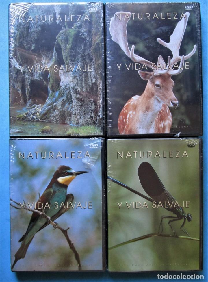 Cine: NATURALEZA Y VIDA SALVAJE (COMPLETA) 19 DVDS PRECINTADOS - SALVAT - 1999 (VER 6 FOTOS) - Foto 5 - 168174272