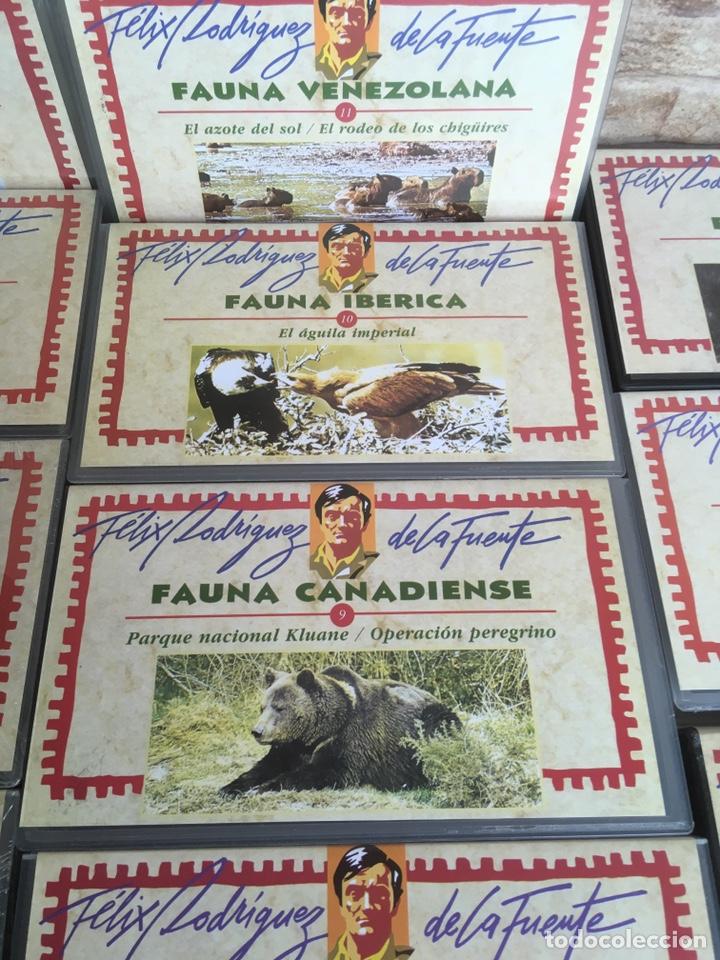 Cine: COLECCION FELIX RODRIGUEZ DE LA FUENTE 17 PELICULAS EDITORIAL SALVAT - Foto 6 - 169198008