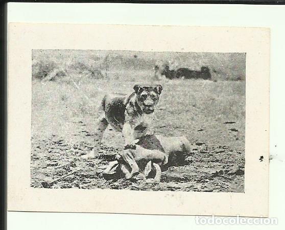PTCC 064 MISTERIOS DE AFRICA 1930 PROGRAMA SENCILLO CINAES WALTER FUTTER B (Cine - Folletos de Mano - Documentales)