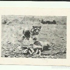 Cine: PTCC 064 MISTERIOS DE AFRICA 1930 PROGRAMA SENCILLO CINAES WALTER FUTTER B. Lote 264684229