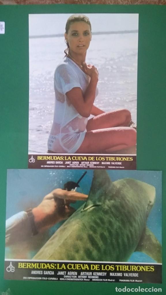 2 FOTOCROMOS BERMUDAS LA CUEVA DE LOS TIBURONES 1978 - JANET AGREN, ARTHUR KENNEDY PERFECTO ESTADO (Cine - Foto-Films y Cine-Novelas)