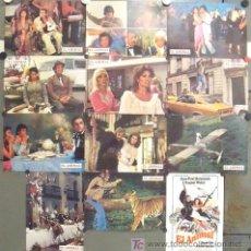 Cine: IK88 EL ANIMAL RAQUEL WELCH JEAN-PAUL BELMONDO SET COMPLETO 12 FOTOCROMOS ORIGINAL ESTRENO. Lote 13685700