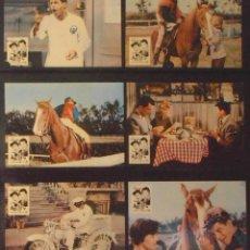 Cine: (1835) EL JINETE LOCO ,DEAN MARTIN,JERRY LEWIS,12 FOTOCROMOS,VER FOTOS. Lote 50508210