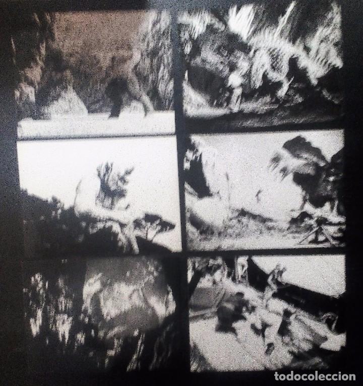 Cine: Simbad y la princesa (1958) LOTE DE 30 FOTOGRAFÍAS 18X24 DE LA PELÍCULA - Foto 7 - 97496339