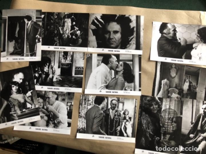 TAMAÑO NATURAL (LUIS GARCÍA BERLANGA 1974). LOTE DE 12 FOTOGRAFÍAS DE PRENSA EN B/N. 19 X 25 CMS. (Cine - Fotos, Fotocromos y Postales de Películas)