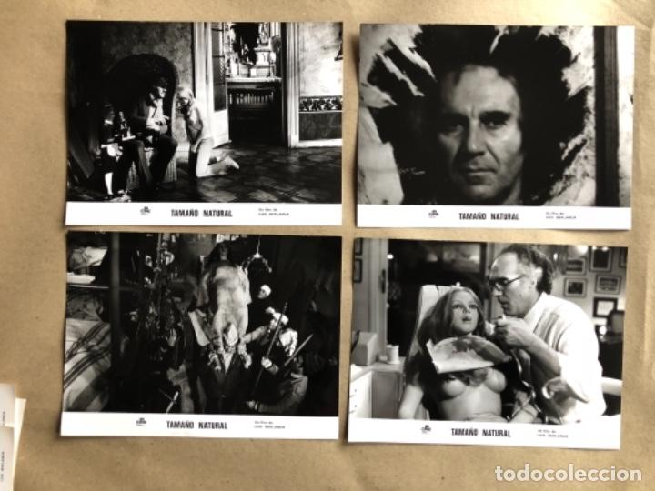 Cine: TAMAÑO NATURAL (LUIS GARCÍA BERLANGA 1974). LOTE DE 12 FOTOGRAFÍAS DE PRENSA EN B/N. 19 x 25 cms. - Foto 2 - 132877914