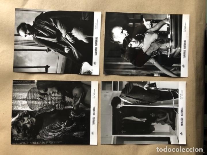 Cine: TAMAÑO NATURAL (LUIS GARCÍA BERLANGA 1974). LOTE DE 12 FOTOGRAFÍAS DE PRENSA EN B/N. 19 x 25 cms. - Foto 3 - 132877914