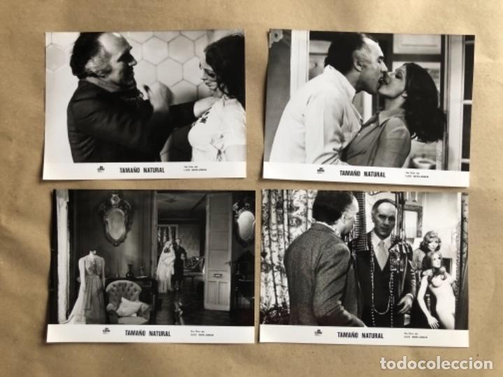 Cine: TAMAÑO NATURAL (LUIS GARCÍA BERLANGA 1974). LOTE DE 12 FOTOGRAFÍAS DE PRENSA EN B/N. 19 x 25 cms. - Foto 4 - 132877914