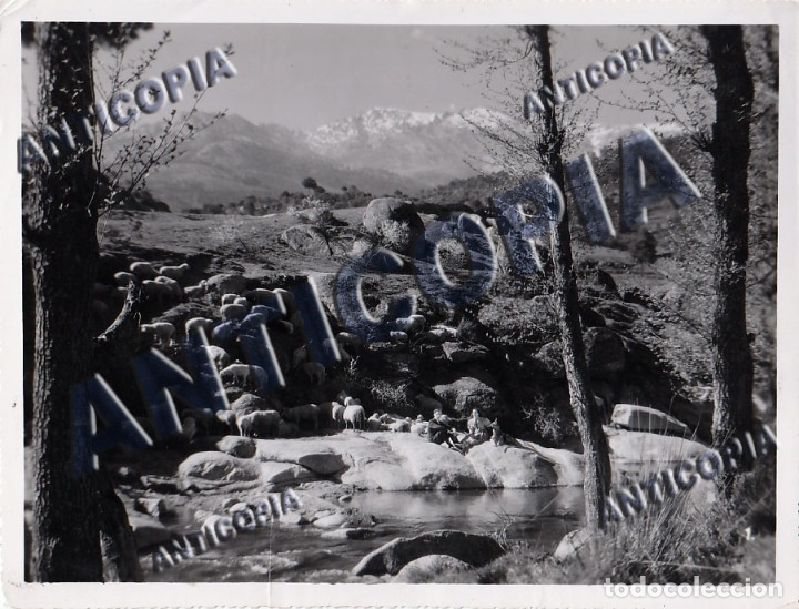 Cine: 10 FOTOGRAFIAS DE DISTINTAS PELICULAS DEL CINE ESPAÑOL AÑOS 50/60/70 (NUM. 3) - Foto 4 - 137465910