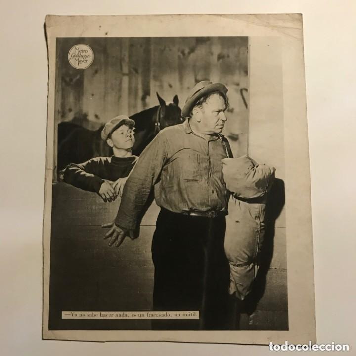 Cine: Metro Goldwyn Mayer 20,8x26 cm - Foto 2 - 149324578