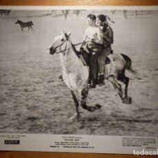Cine: FOTOGRAFÍA PELÍCULA - SAVAGE SAM - BRIAN KEITH - 20,5 X 25,5 CM. . Lote 153296510