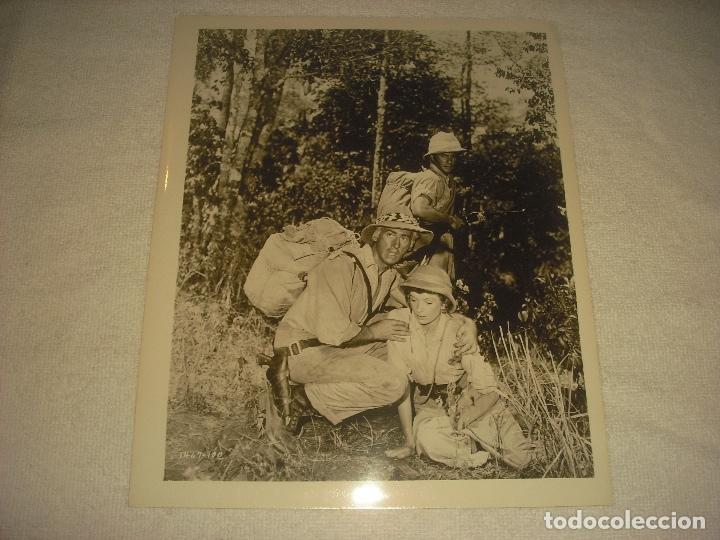 LAS MINAS DEL REY SALOMON . STEWART GRANGEL Y DEBORA KERR. ANTIGUA FOTO DE 25 X 21 CM. (Cine - Fotos, Fotocromos y Postales de Películas)