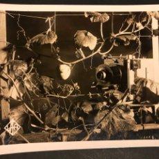 Cine: FOTO ORIGINAL DEPARTAMENTO EDUCATIVO UFA.CRECIMIENTO DE CALABAZA CON CAMARA CONDENSADOR TIEMPO. Lote 191290083