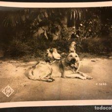 Cine: FOTO ORIGINAL DEPARTAMENTO EDUCATIVO UFA.PERRO WOLFY CON LORO Y GALLINAS 18 X 13 CM. Lote 191294791