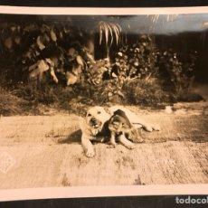 Cine: FOTO ORIGINAL DEPARTAMENTO EDUCATIVO UFA.PERRO WOLFY CON MONO 18 X 13 CM. Lote 191294910